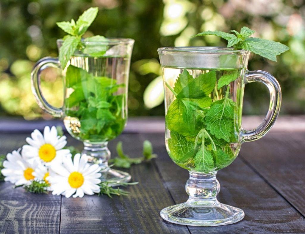 Мелисса при беременности: можно ли пить чай с мелиссой при беременности, ее польза и вред