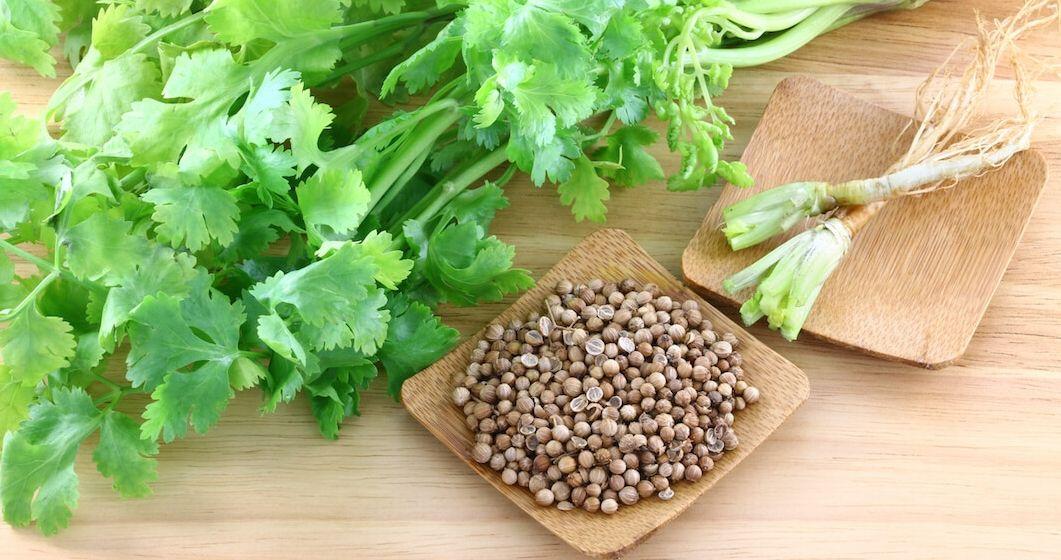 Горчица применение и полезные лечебные свойства