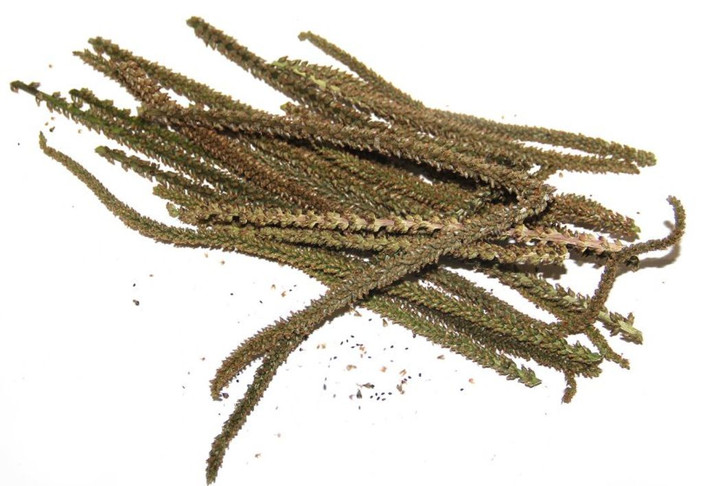 Препараты из семян подорожника