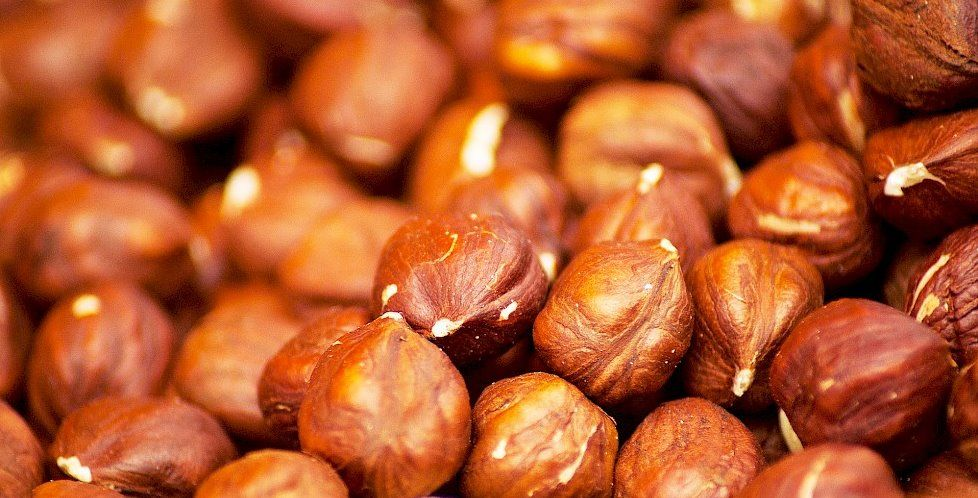 Лесной орех или фундук: калорийность на 100 грамм — 628 ККал. Белки, жиры, углеводы, химический состав.
